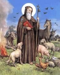sant'antonio abate, sant0antonio protetore animali